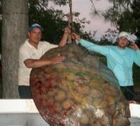 La imponente raya capturada por cuatro pescadores en Reconquista.